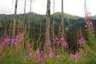 High Tatras flora