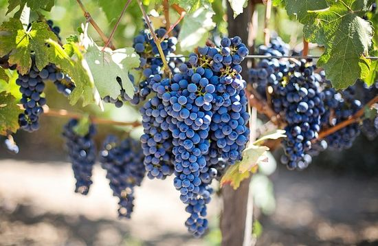 Small Carpathians Wine Route