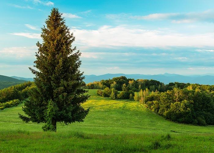 Meadow Slovakia
