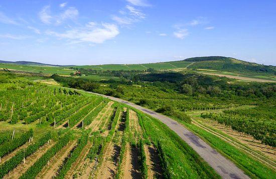 Tokaj Wine Route