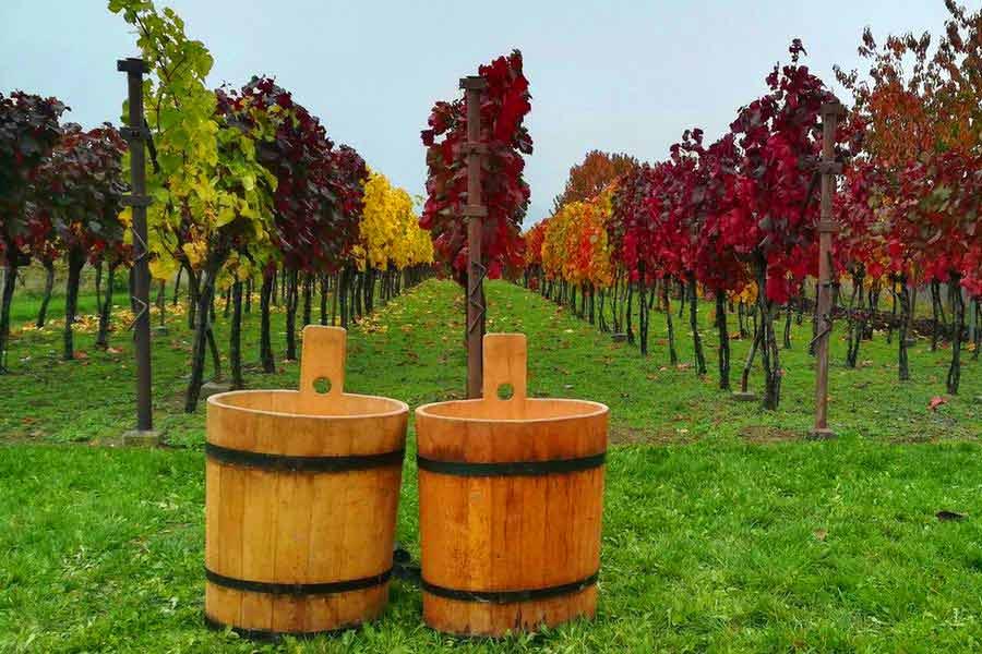 Zahorie Wine Route - Vineyard