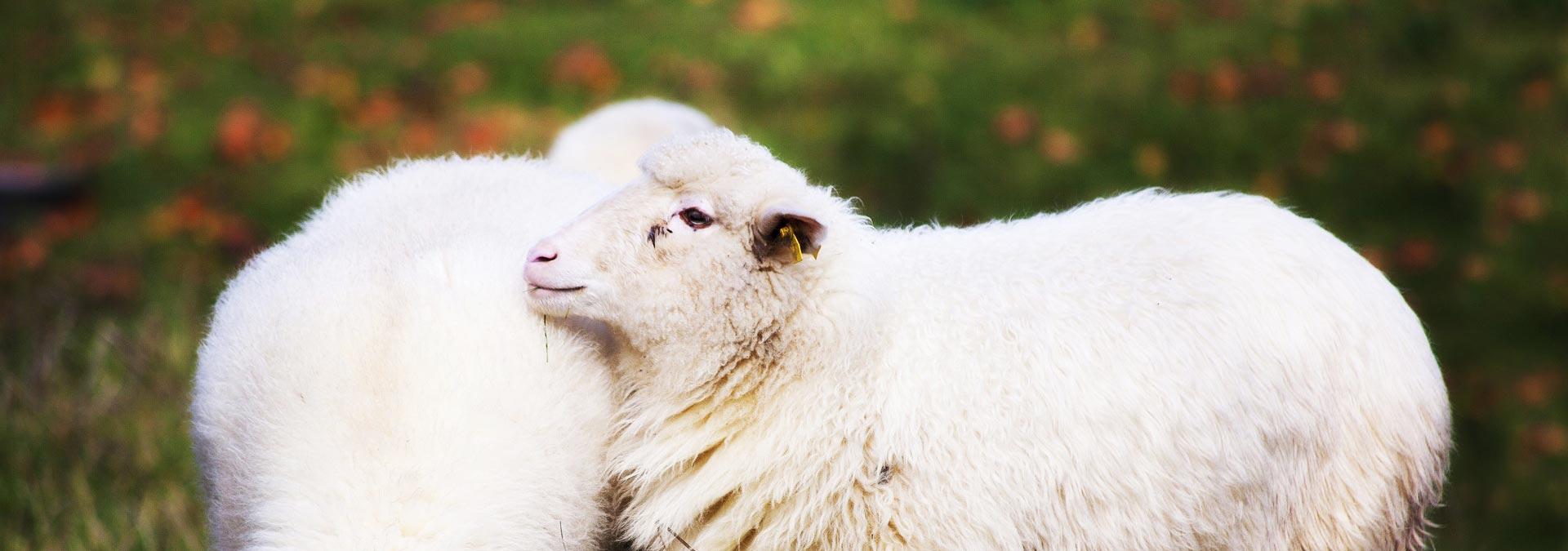 Sheep Breeding Country Tour of Slovakia, Slovakia Travel, Location