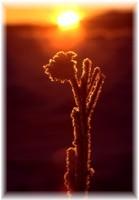 Soleil et fleur