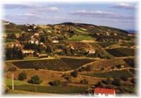 Vineyard Natur