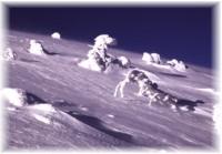 Winter Natur in Niedere Tatra
