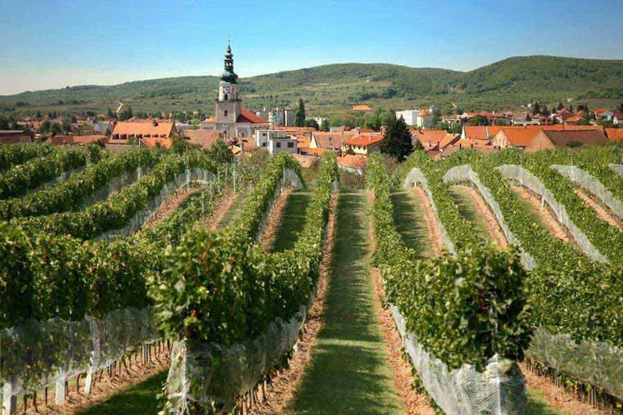 Small Carpathians - Vineyard