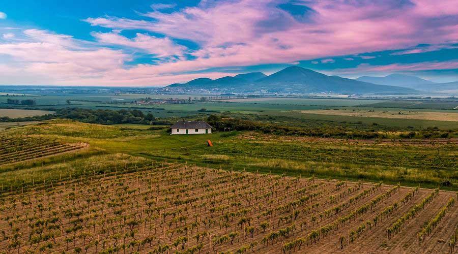 Tokaj Wine Route - Vinicky Vineyard