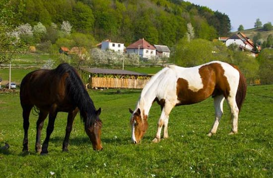 Horseback Riding with Day Trips in Zvolen - Kralova Farm
